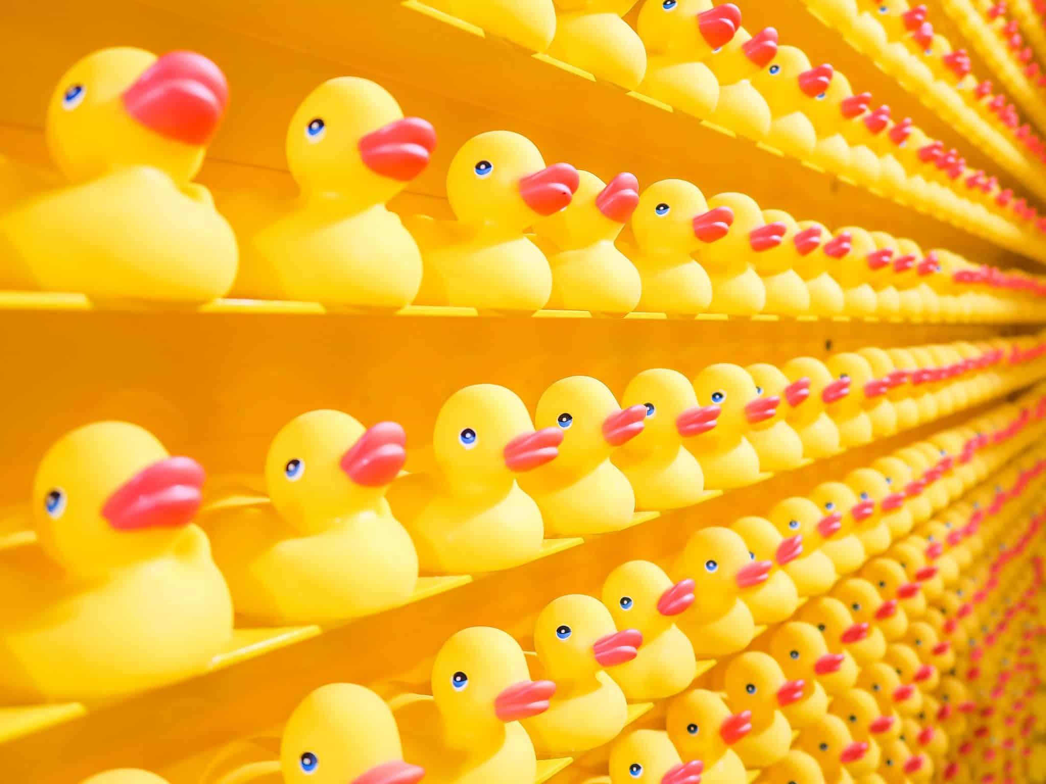 Get your ducks in row.